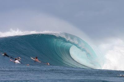 Coconuts Surf.