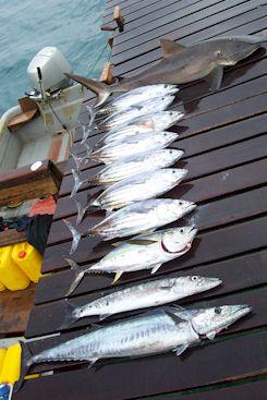 Solomon Islands Fishing. Wilderness Lodge.