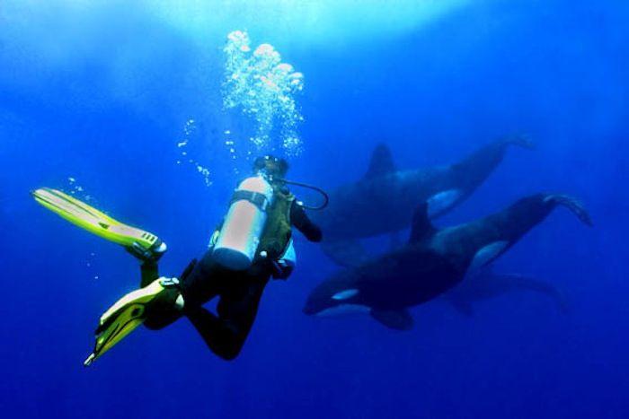 Jill_with_orcas-45-700-550-80.jpg