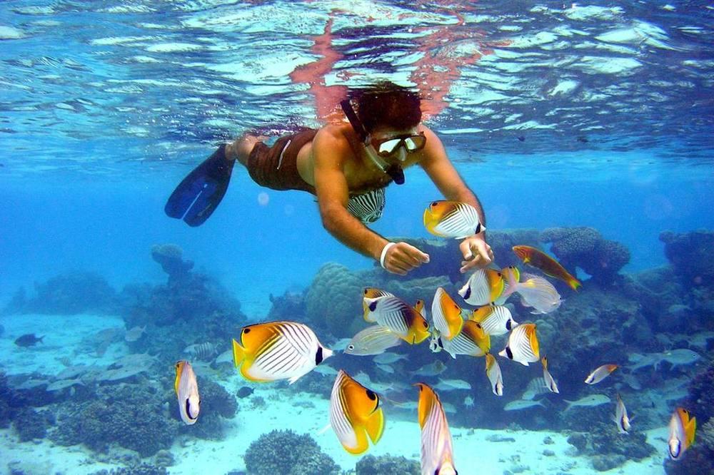 fishfeeding2.jpg.1024x0.jpg