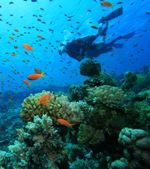 snorkelling_1_long.jpg