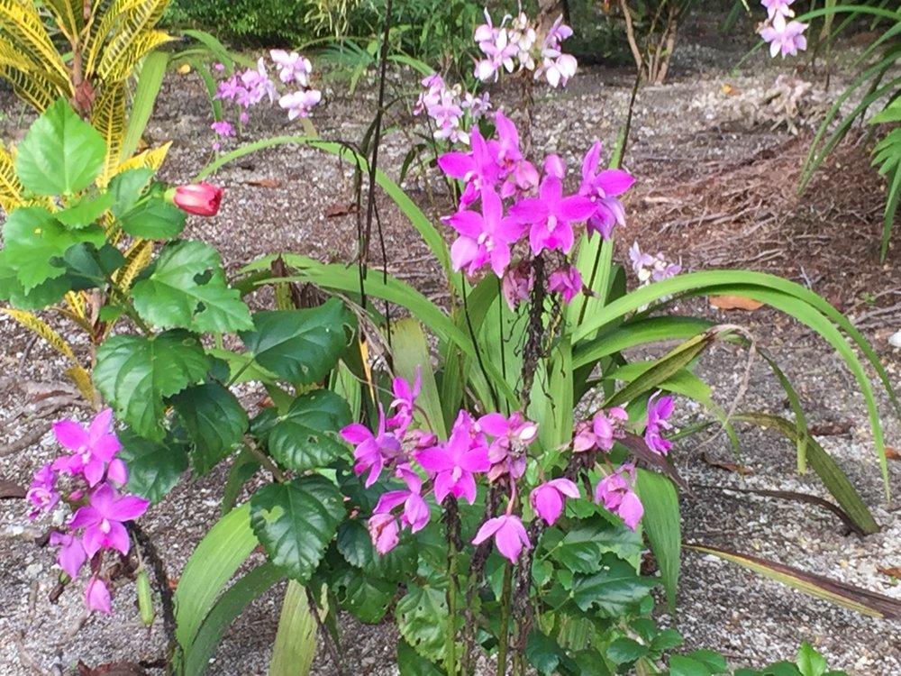 Titiru flowers.jpg