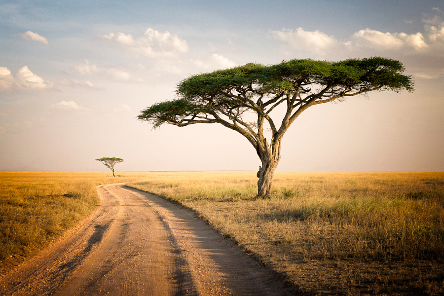 A landscape from the Serengeti National Park in Tanzania..jpg