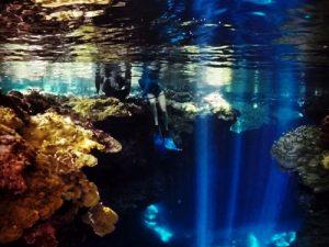 Diving people sitting on Reef.jpg