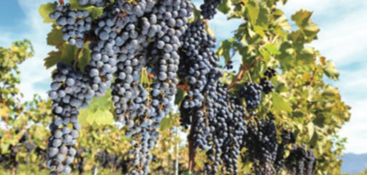 winerytour.jpg