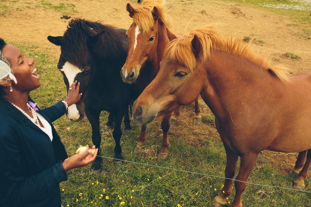 Horses Iceland