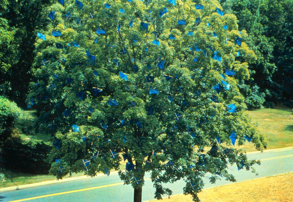 What a Tree Dreams When a Tree Dreams