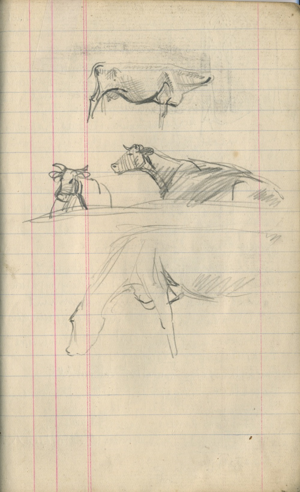 Sketches of Cattle