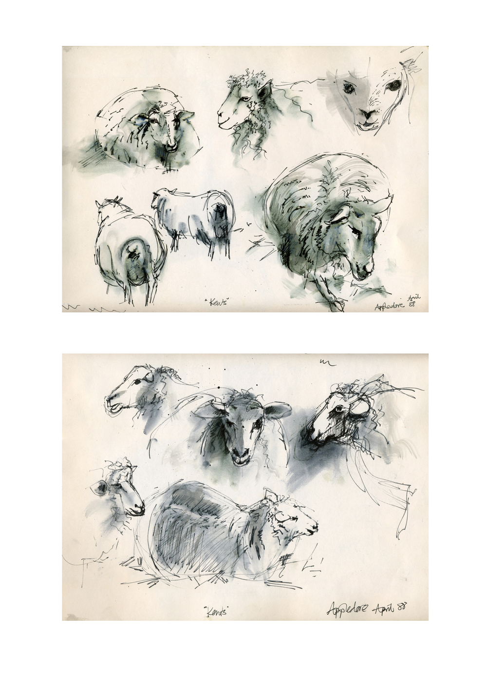 Sketches of Sheep