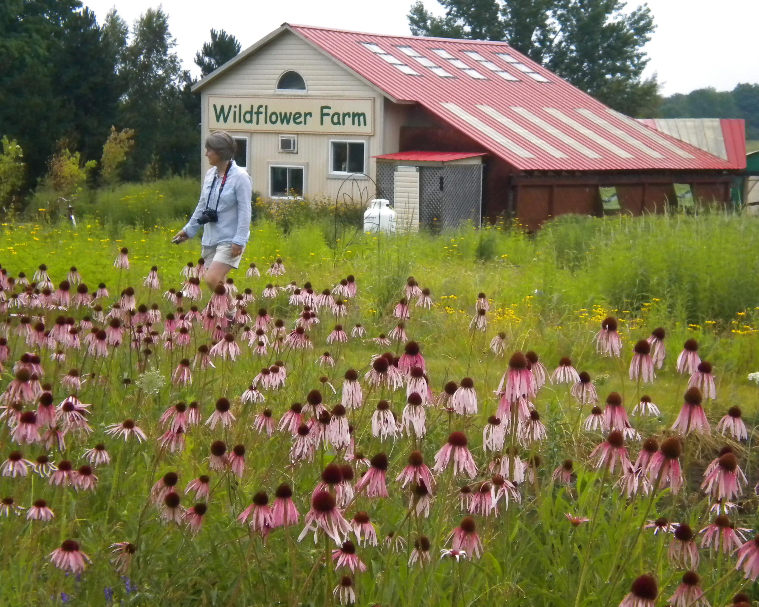 plein air wildflowers ruth rodgers