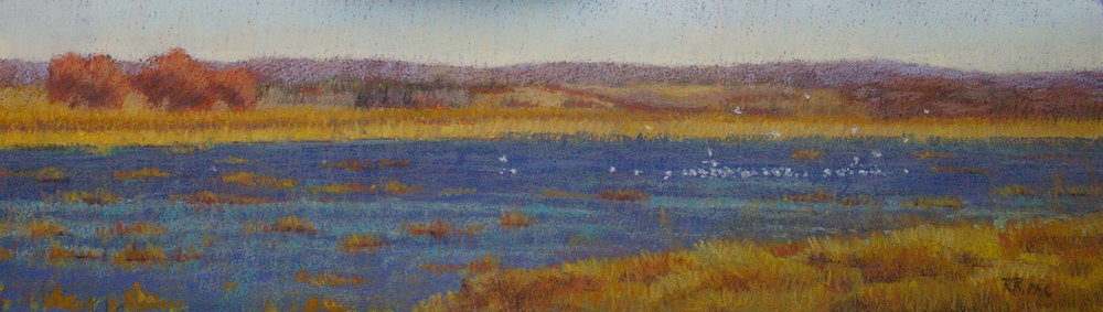 A Gathering of Gulls pastel $550