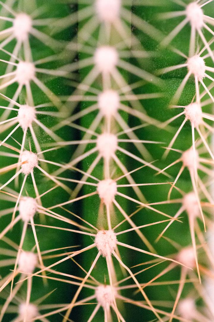 cactus flat web.jpg