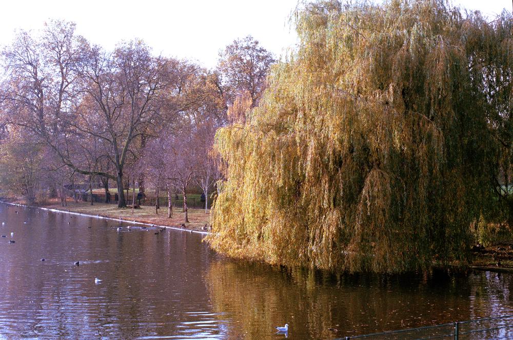 london004.jpg