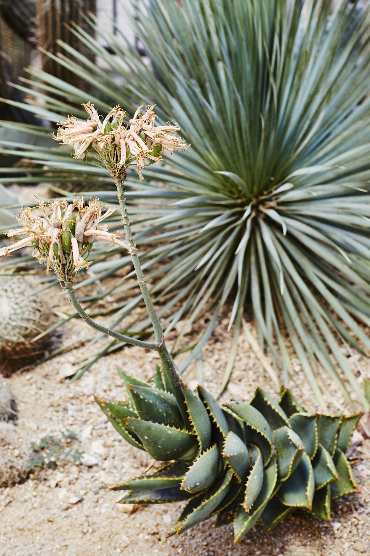 El_Centro_Cactus_Garden_SHOT_06_004.jpg