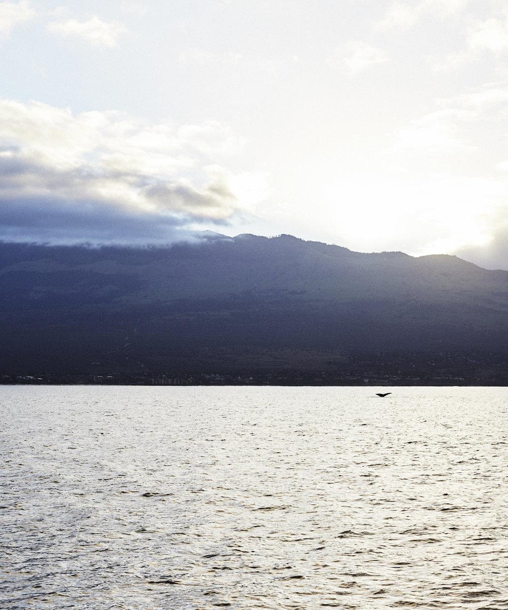 190107_Maui_True_0054.jpg