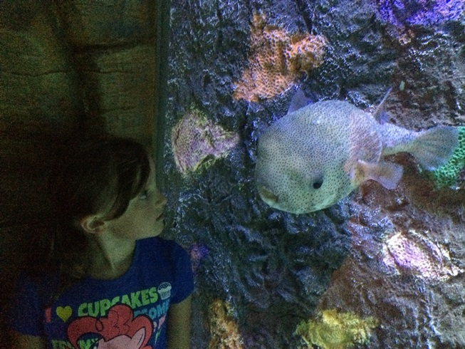 Elle and the Puffer Fish