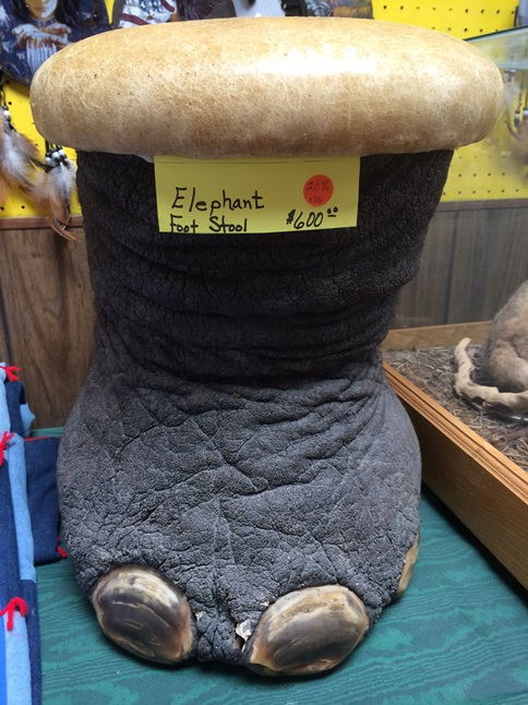 ELEPHANT+FOOT+STOOL.JPG