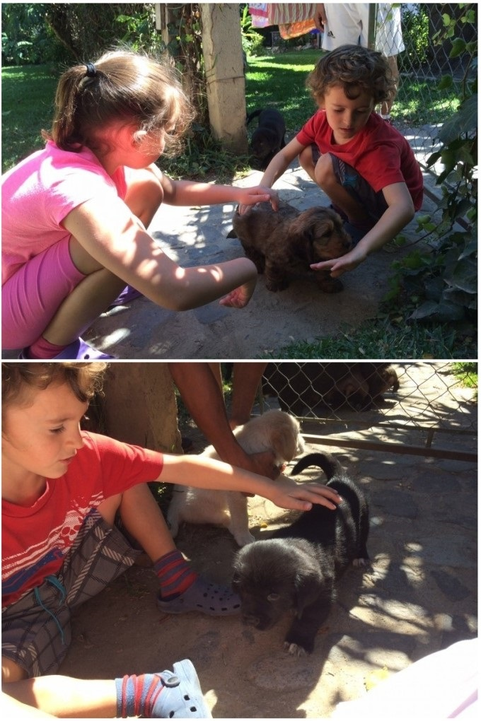 An extra treat - The kids and I got to play with the neighbor's 5 week old puppies. Elle's favorite is the multi-chocolate colored puppy, while Tag likes the blond one.