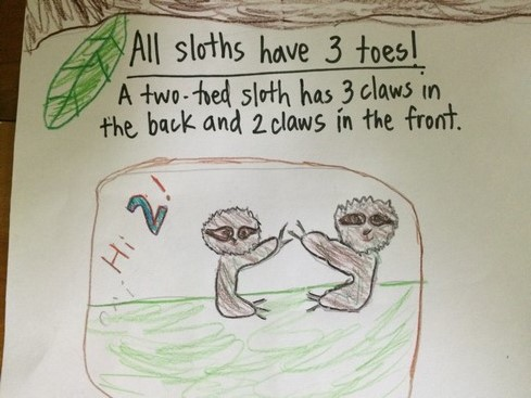 We think we saw a two-toed sloth, but we're not positive.