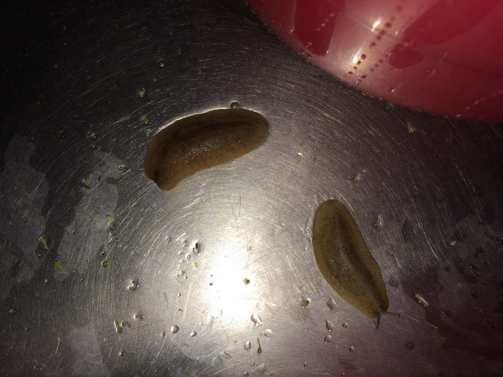 Maybe if I'd brought these in from my own garden, I would have expected something like this. This simply was not the case and I was totally freaked out seeing these slugs in my sink.