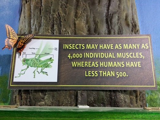 There were lots of interesting facts. The kids made me take several pictures factoids and dead insects.