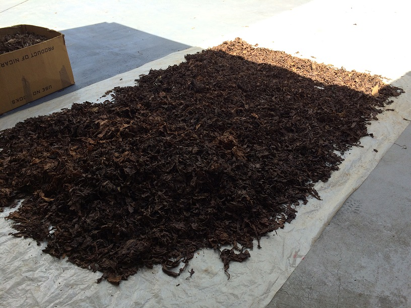 Tobacco drying in the sun
