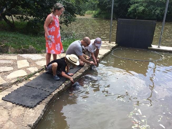 Feeding manatees