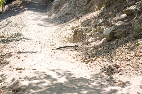 snake! 2