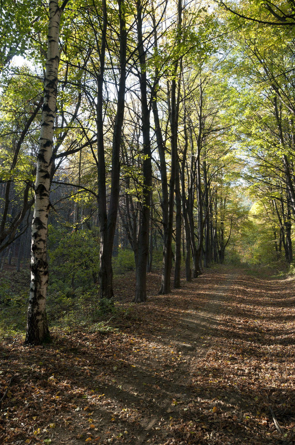http://www.dreamstime.com/royalty-free-stock-photos-path-woods-image21927958