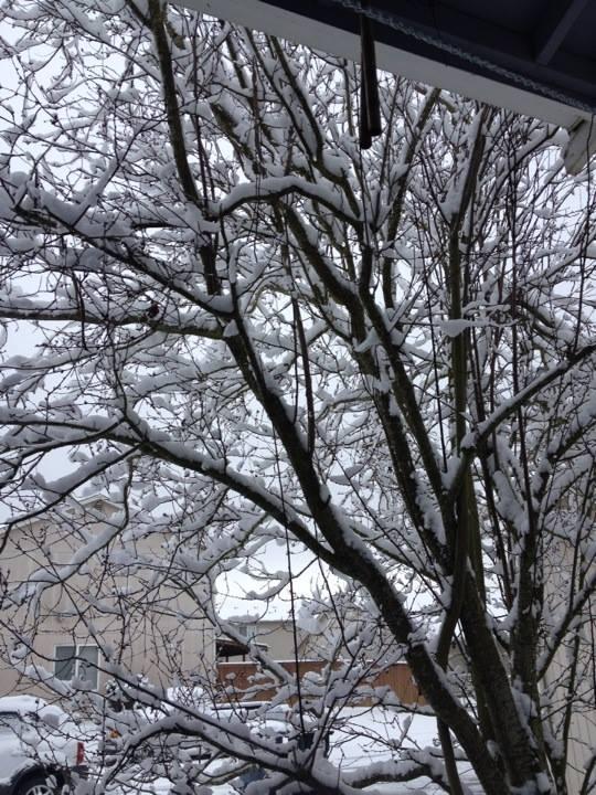 snowtreefrontyard.jpg