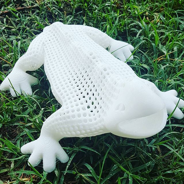 #Vorinoi #Lizard on #grass