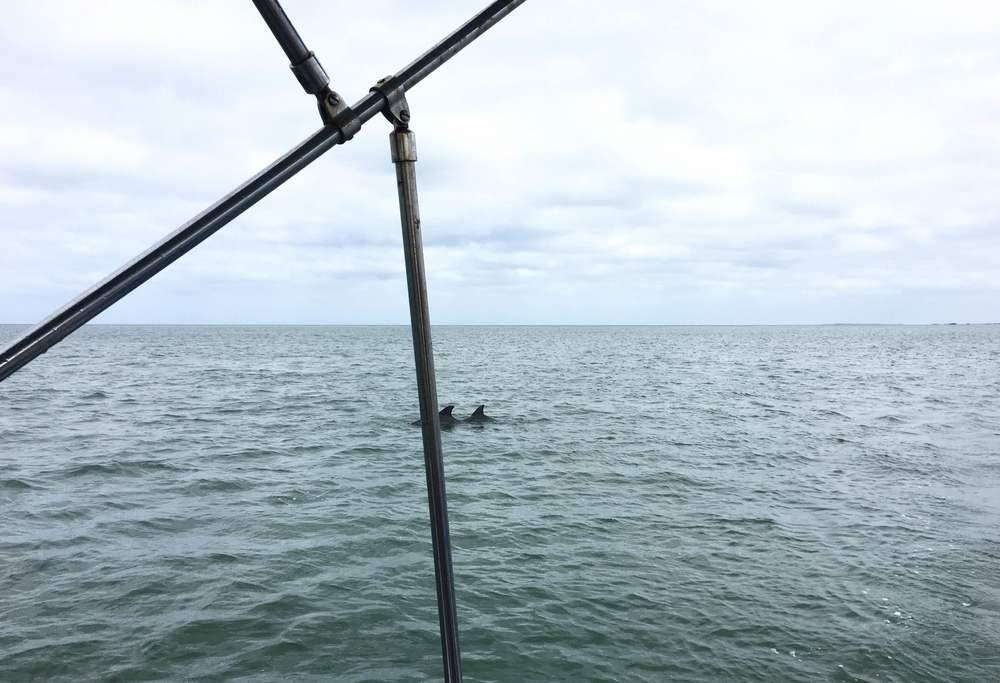 dolphin sighting!
