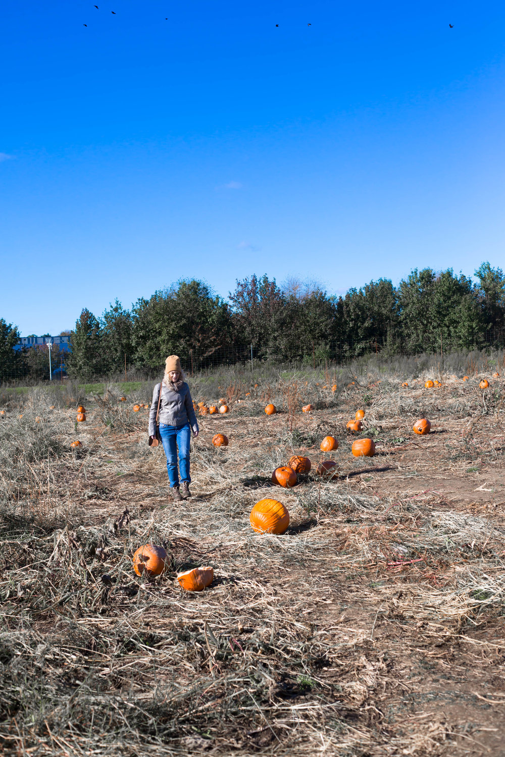 Pumpkin Patch (3 of 26).jpg