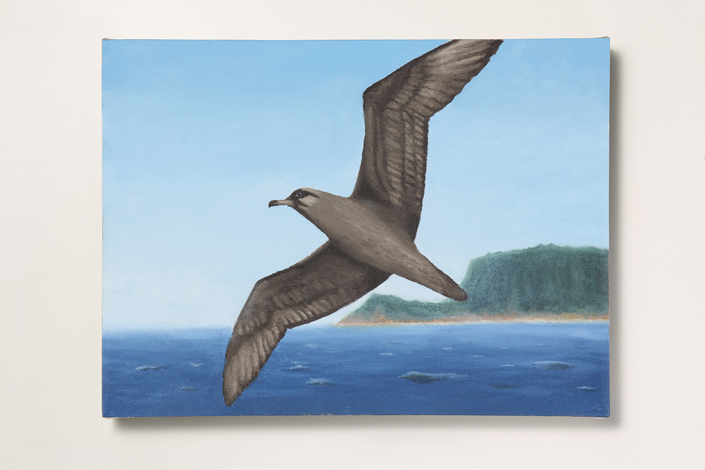 Search: Ericka // #16 // The Albatross • 2009 • Oil on canvas • 11.8 x 15.7 in • MAM - São Paulo Museum of Modern Art Collection