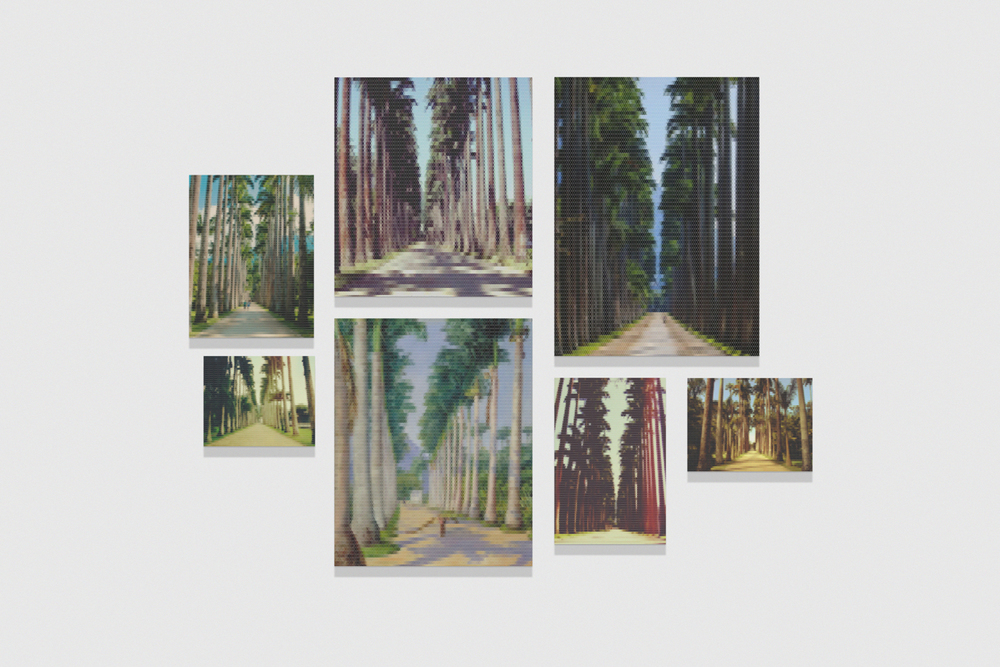 Avenue of Royal Palms (Botanic Gardens) • 2010/2015 • Print on methacrylate and print on cotton paper • Dimensions variable