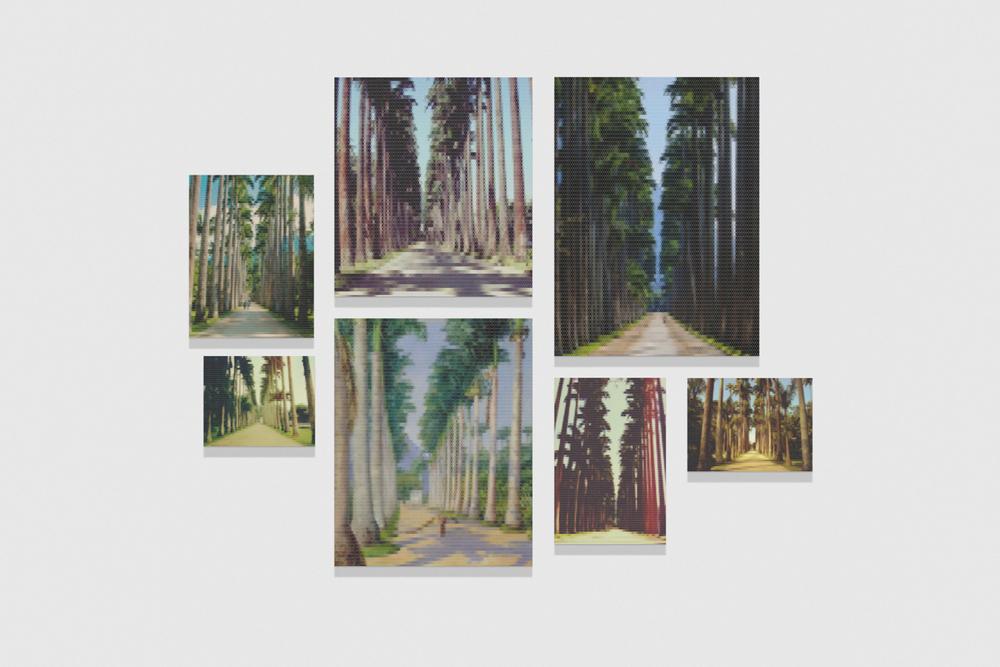 Avenida com Palmeiras (Jardim Botânico) •2010/2015 • Impressão em metacrilato e impressão em papel algodão • Dimensões variáveis