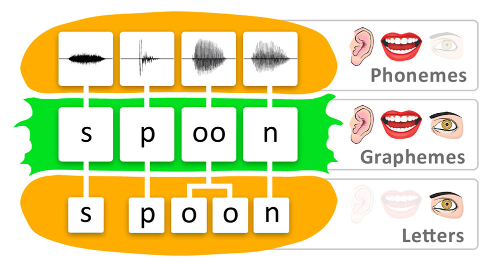 Figure 1: A hamburger analogy can help students to understand how a word, in this case 'spoon', may be divided into phonemes (speech sounds), graphemes (letters and groups of letters that represent speech sounds) and letters (visual symbols). Click HERE for more information.
