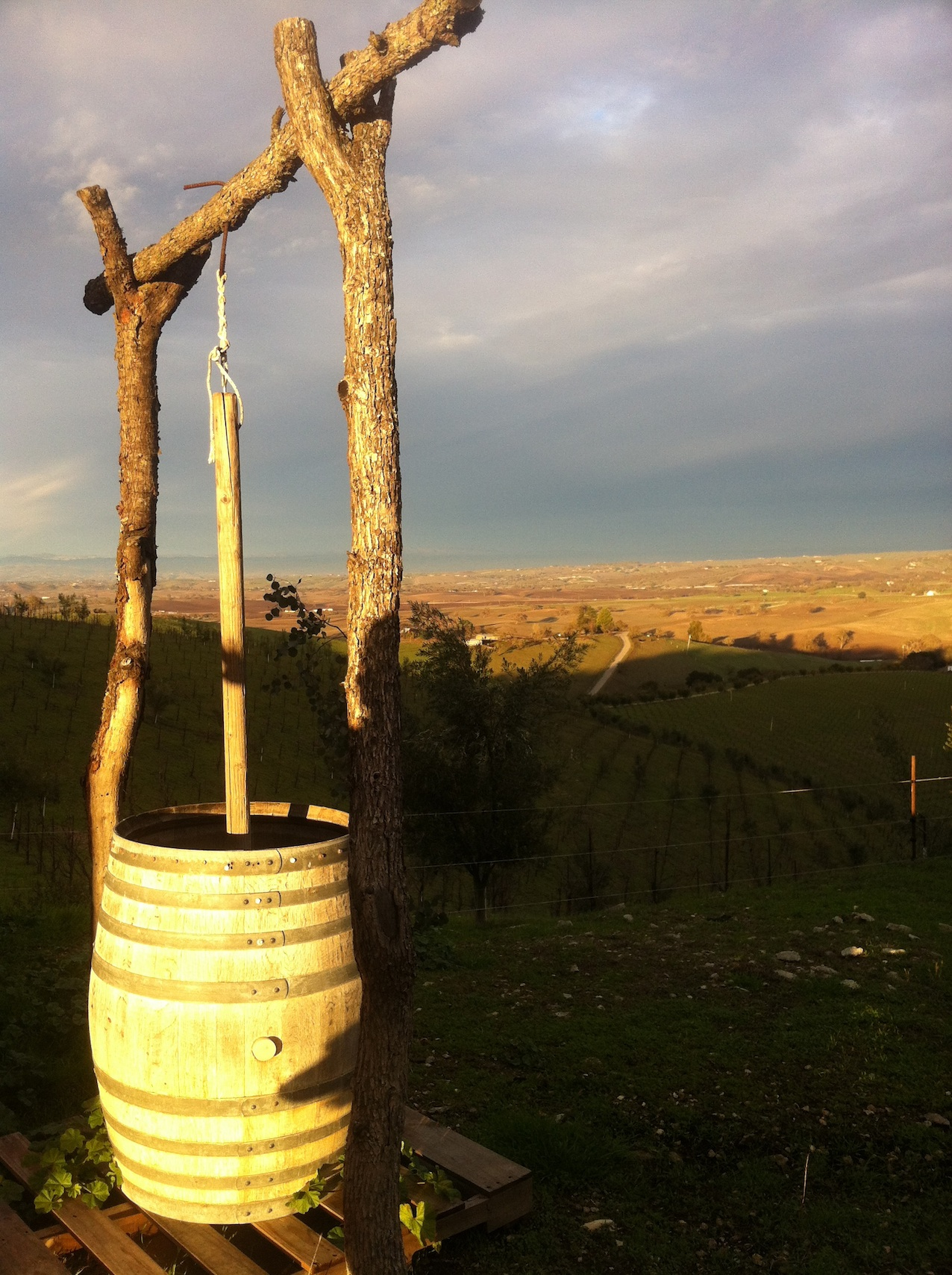 This barrel is used for preparing homeopathic treatments for the vines