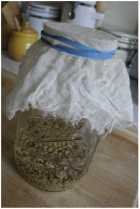 Dried Lentils in a covered jar- photo courtesy of Stacey Pedersen