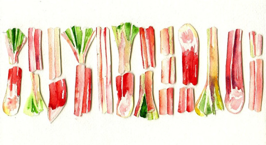 Rhubarb illustration by Jessie Kanelos Weiner of thefrancofly.com