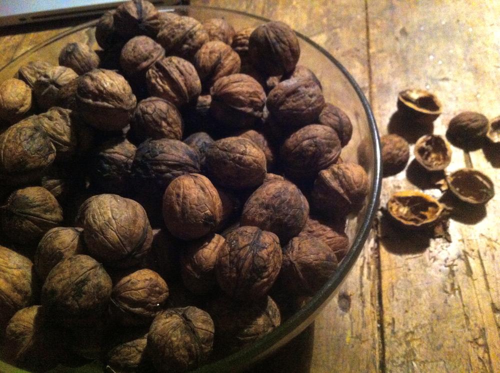 Foraged walnuts in the Loir-et-Cher region of France