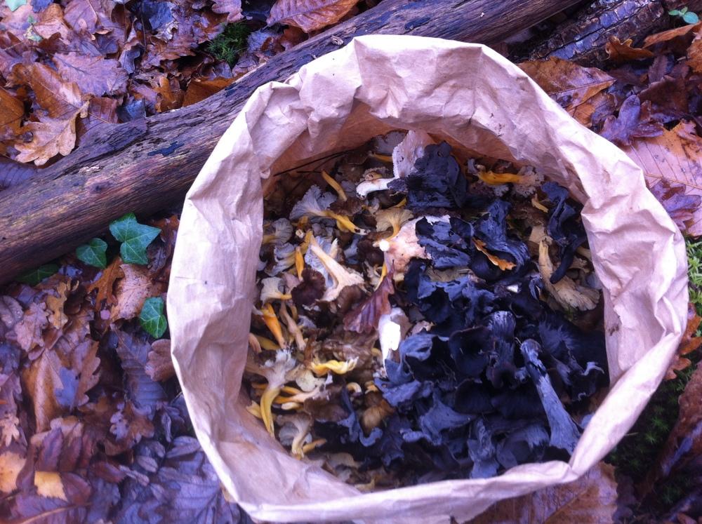 Foraged wild mushrooms in the Loir-et-Cher