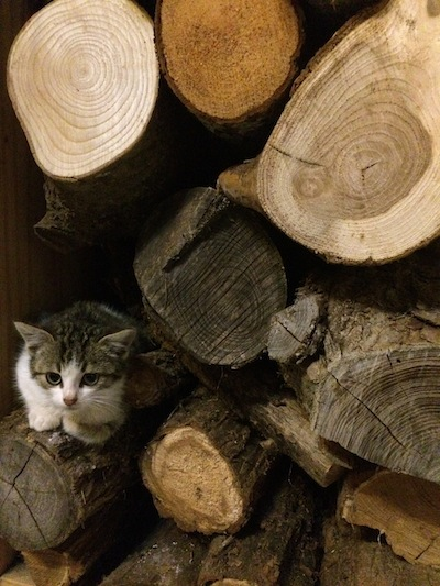 "Dale ""hiding"" in the wood stack"