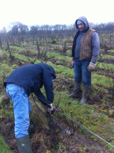 A pruning lesson in the vines