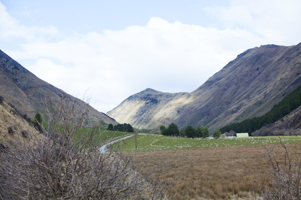 Queenstown_web11.jpg