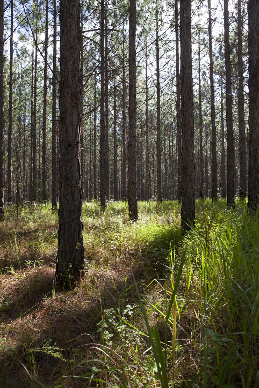pineforestblog-9710web.jpg