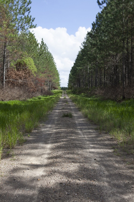 pineforestblog-9485web.jpg
