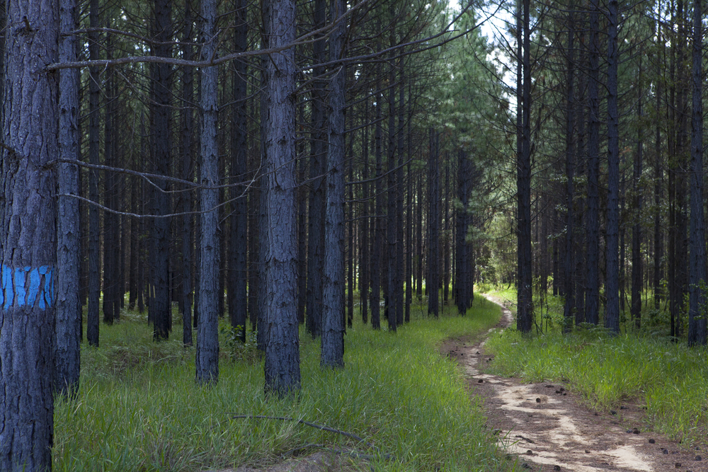 pineforestblog-9655web.jpg
