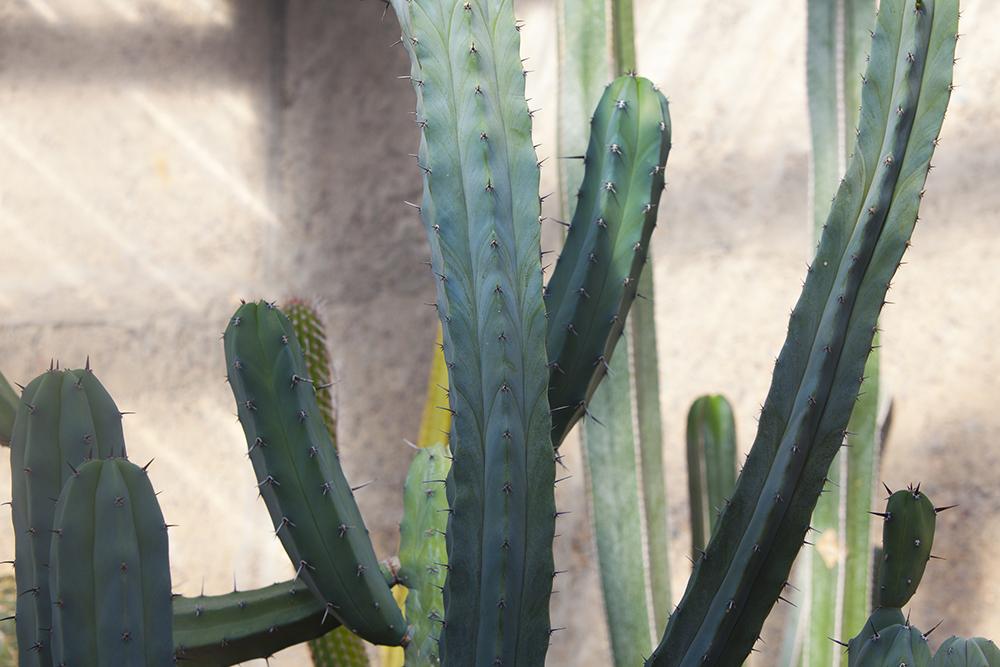 botanicgardens-0404-web.jpg