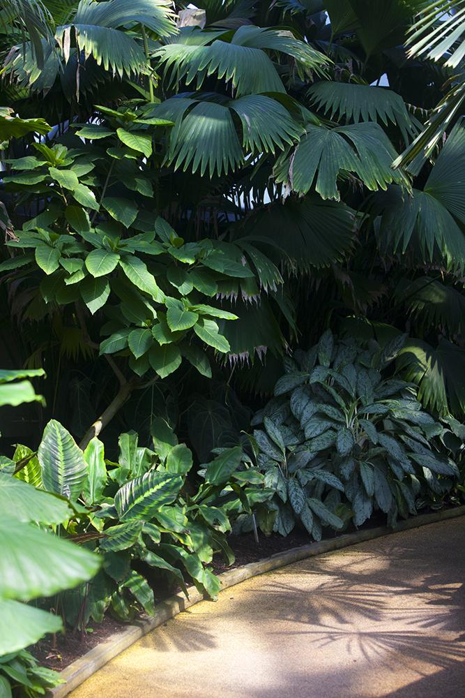 botanicgardens-0490-web.jpg